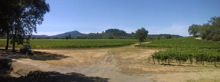Beautiful Sonoma County, home of Vineman 70.3
